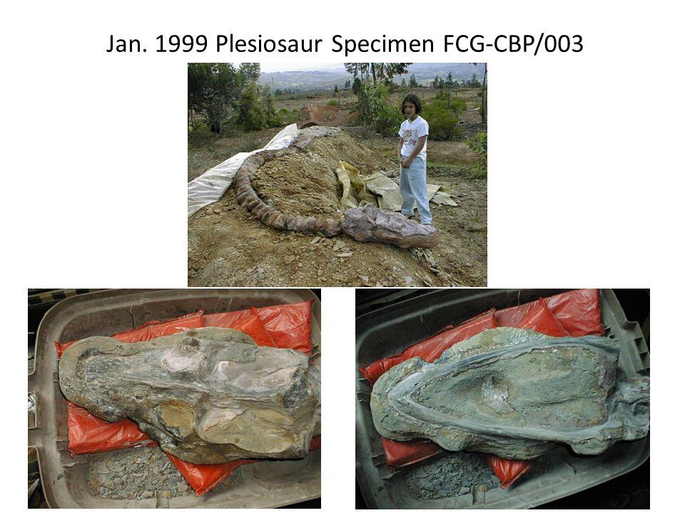 Jan. 1999 Plesiosaur Specimen FCG-CBP/003