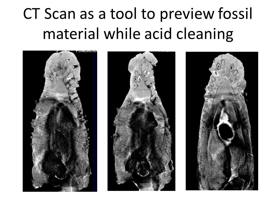 CT Scan as a tool to preview fossil material while acid cleaning