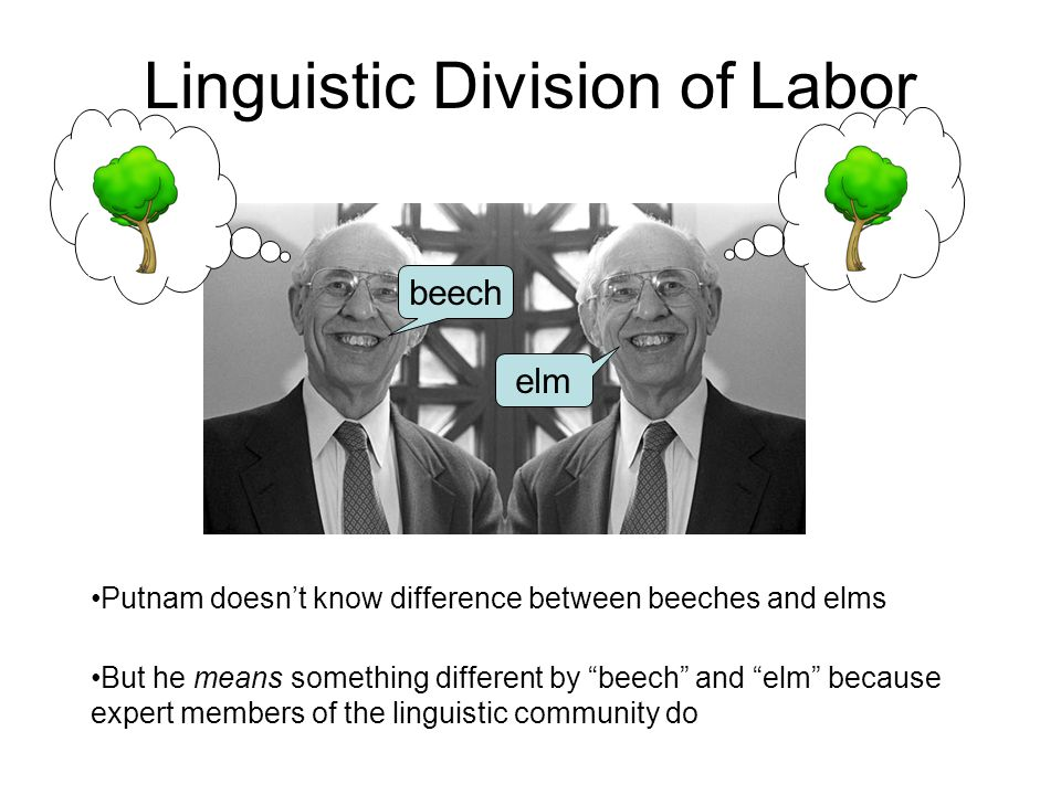 "Linguistic Division of Labor beech elm Putnam doesn't know difference between beeches and elms But he means something different by ""beech"" and ""elm"" b"