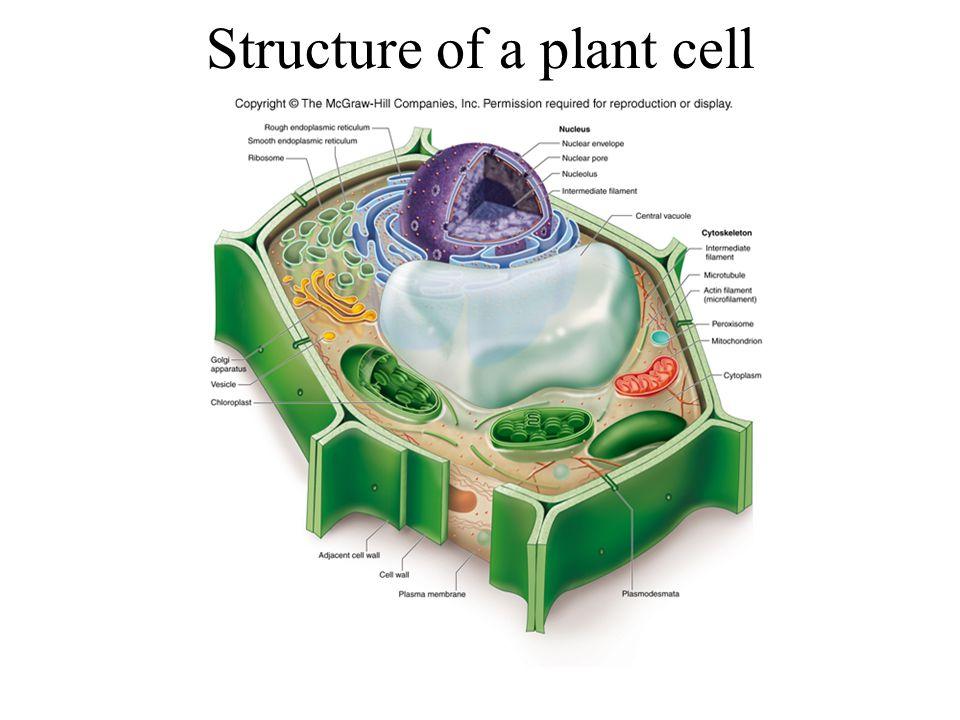 Ribosome structure