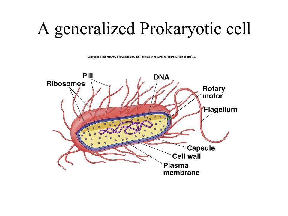 Flagellum and cilium