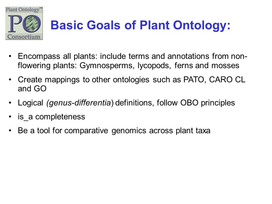 Basic Goals of Plant Ontology: Encompass all plants: include terms and annotations from non- flowering plants: Gymnosperms, lycopods, ferns and mosses
