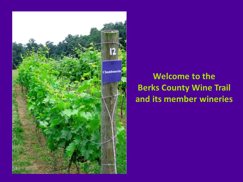 Welcome to the Berks County Wine Trail and its member wineries