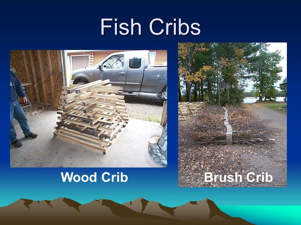 Fish Cribs Wood CribBrush Crib