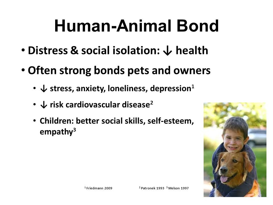 Human-Animal Bond Distress & social isolation: ↓ health Often strong bonds pets and owners ↓ stress, anxiety, loneliness, depression 1 ↓ risk cardiovascular disease 2 Children: better social skills, self-esteem, empathy 3 1 Friedmann 2009 2 Patronek 1993 3 Melson 1997