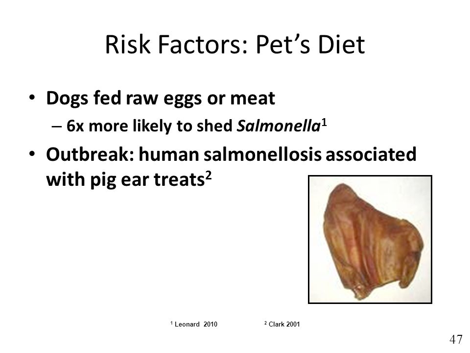 Risk Factors: Pet's Diet Dogs fed raw eggs or meat – 6x more likely to shed Salmonella 1 Outbreak: human salmonellosis associated with pig ear treats 2 1 Leonard 2010 2 Clark 2001 47