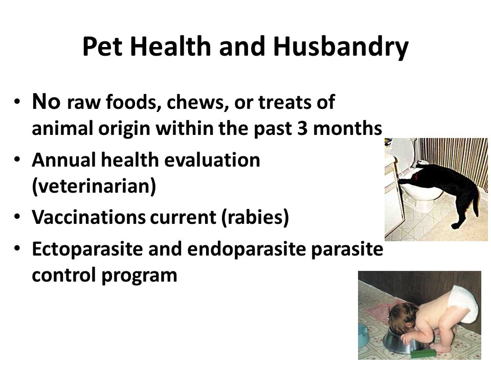 Pet Health and Husbandry No raw foods, chews, or treats of animal origin within the past 3 months Annual health evaluation (veterinarian) Vaccinations current (rabies) Ectoparasite and endoparasite parasite control program