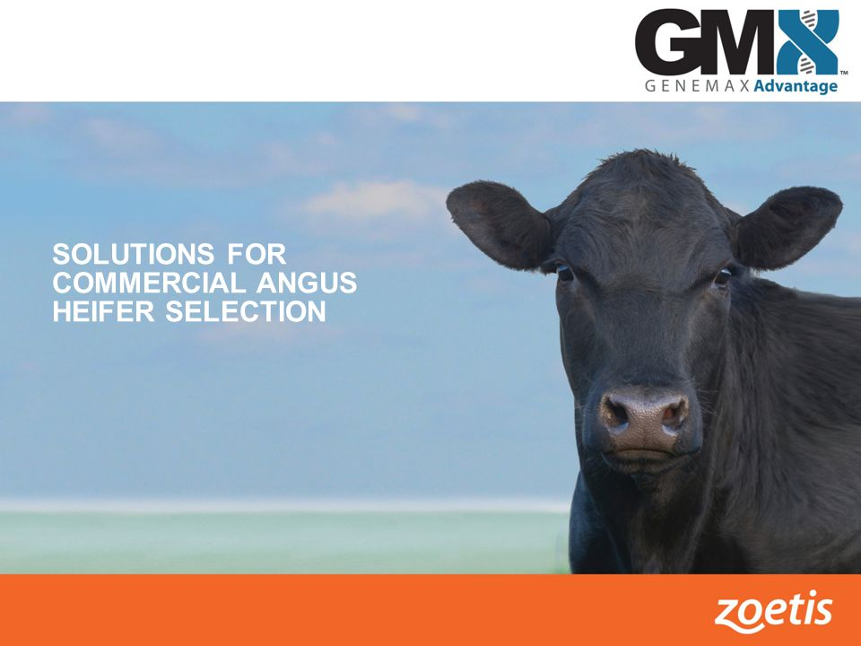 TOTAL ADVANTAGE SCORE – RELATIVE TRAIT CONTRIBUTIONS Maternal Heifer Pregnancy, Calving Ease Total Maternal, Milk & Cow Size Growth & Efficiency Weaning Weight, Yearling Weight & Feed Intake Carcass Merit Carcass Weight, Ribeye Area, Fat & Marbling