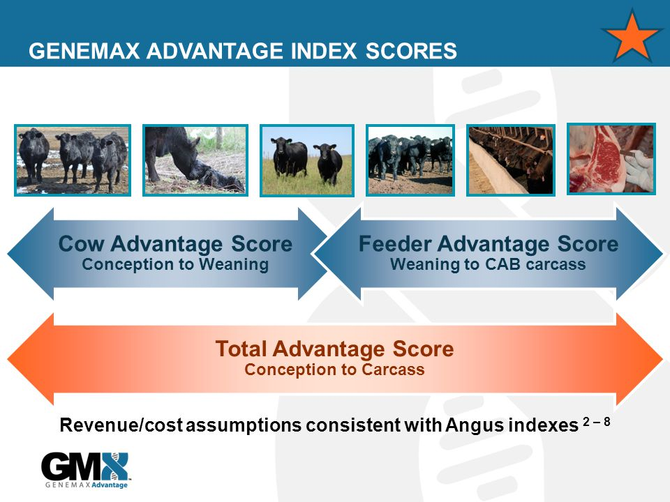 GENEMAX ADVANTAGE INDEX SCORES Revenue/cost assumptions consistent with Angus indexes 2 – 8 Cow Advantage Score Conception to Weaning Feeder Advantage Score Weaning to CAB carcass Total Advantage Score Conception to Carcass