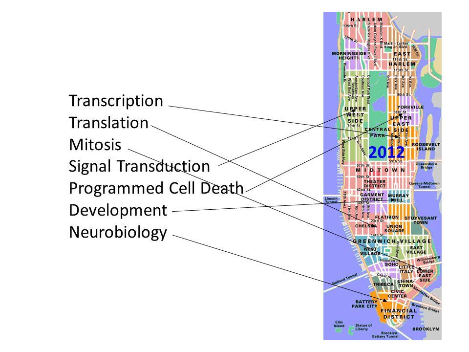 Transcription Translation Mitosis Signal Transduction Programmed Cell Death Development Neurobiology