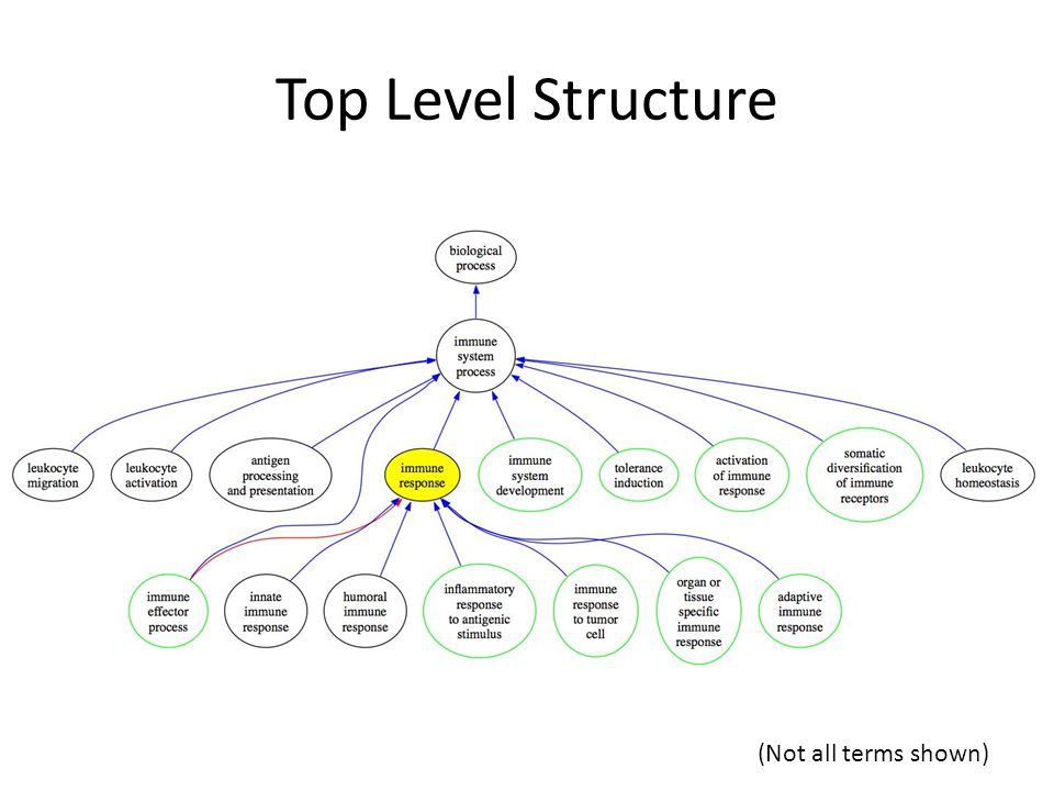 Top Level Structure (Not all terms shown)