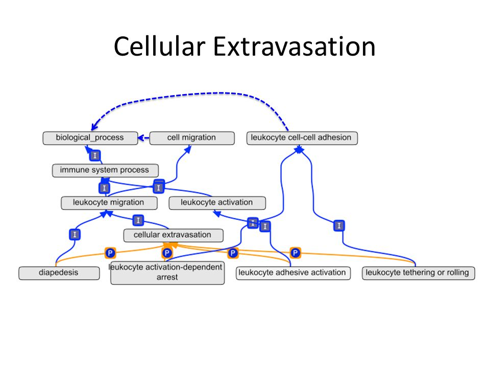 Cellular Extravasation