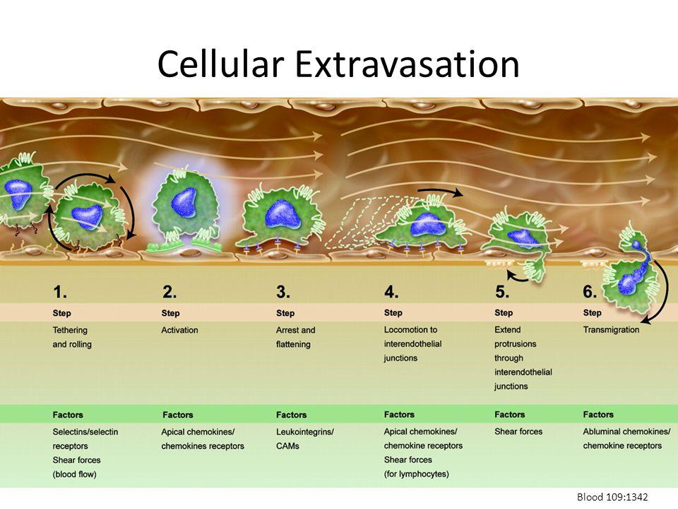 Cellular Extravasation Blood 109:1342