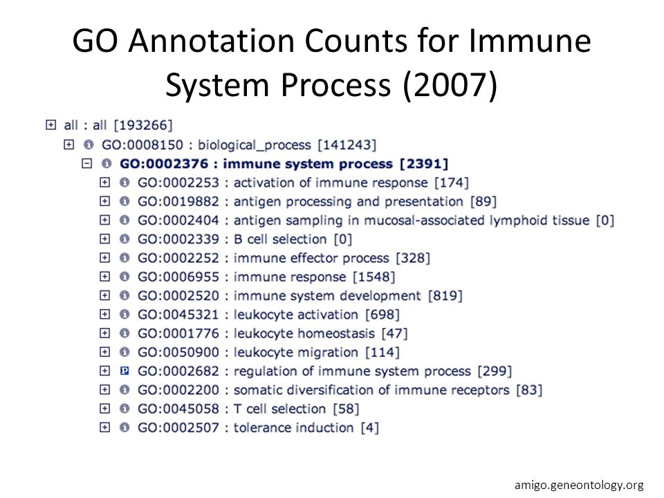 GO Annotation Counts for Immune System Process (2007) amigo.geneontology.org