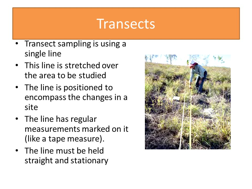 Transects Transect sampling is using a single line This line is stretched over the area to be studied The line is positioned to encompass the changes in a site The line has regular measurements marked on it (like a tape measure).