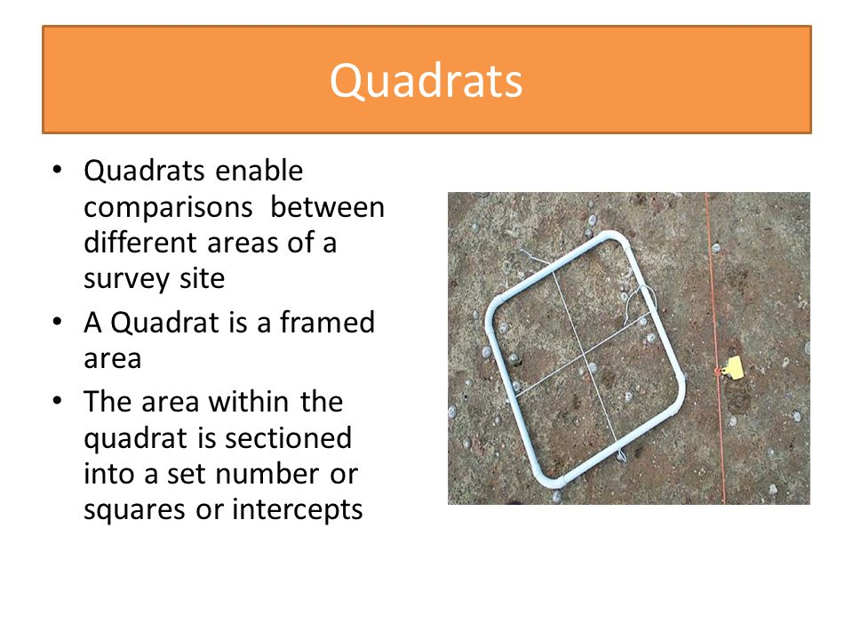 Quadrats Quadrats enable comparisons between different areas of a survey site A Quadrat is a framed area The area within the quadrat is sectioned into a set number or squares or intercepts