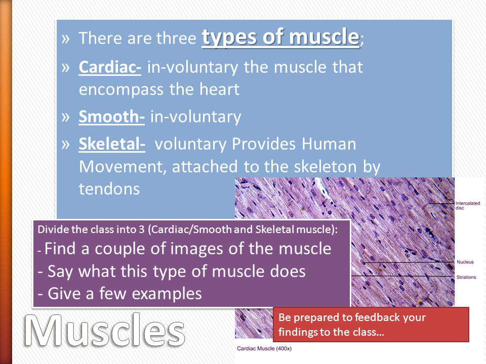 types of muscle » There are three types of muscle ; » Cardiac- in-voluntary the muscle that encompass the heart » Smooth- in-voluntary » Skeletal- voluntary Provides Human Movement, attached to the skeleton by tendons types of muscle » There are three types of muscle ; » Cardiac- in-voluntary the muscle that encompass the heart » Smooth- in-voluntary » Skeletal- voluntary Provides Human Movement, attached to the skeleton by tendons Divide the class into 3 (Cardiac/Smooth and Skeletal muscle): - Find a couple of images of the muscle - Say what this type of muscle does - Give a few examples Divide the class into 3 (Cardiac/Smooth and Skeletal muscle): - Find a couple of images of the muscle - Say what this type of muscle does - Give a few examples Be prepared to feedback your findings to the class…