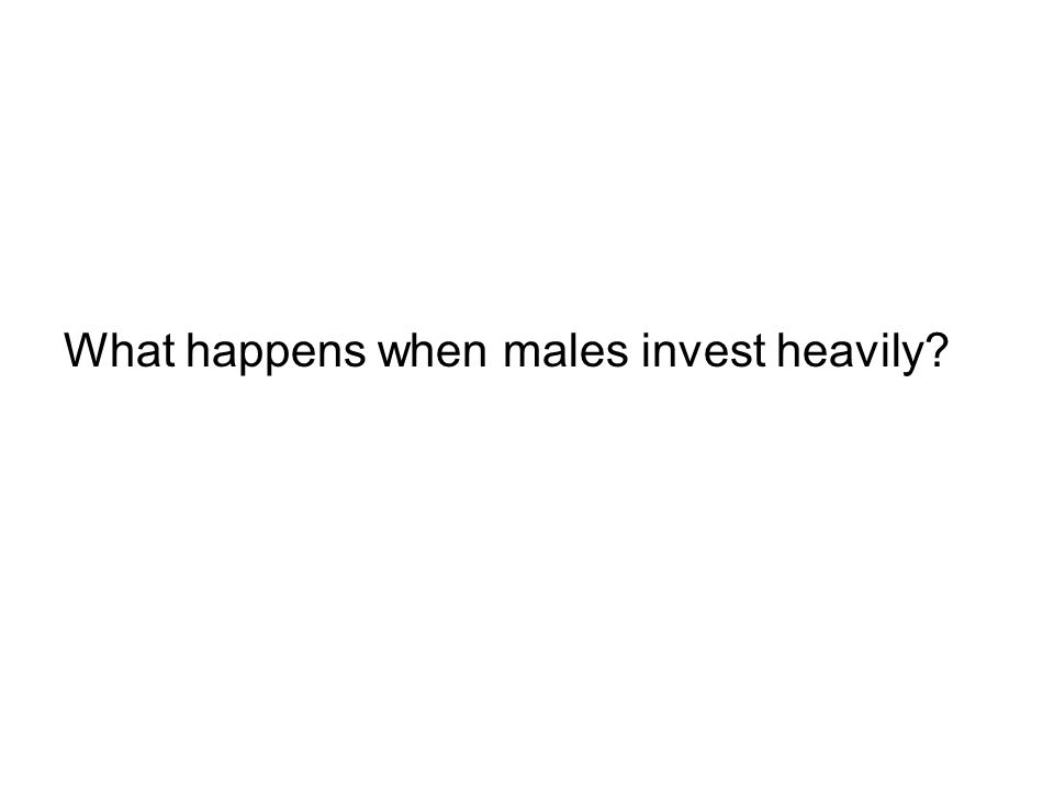 What happens when males invest heavily