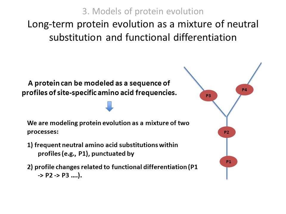 3. Models of protein evolution Long-term protein evolution as a mixture of neutral substitution and functional differentiation P1 P2 P3 P4 We are mode