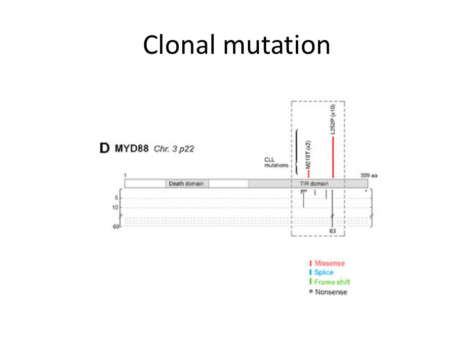 Clonal mutation