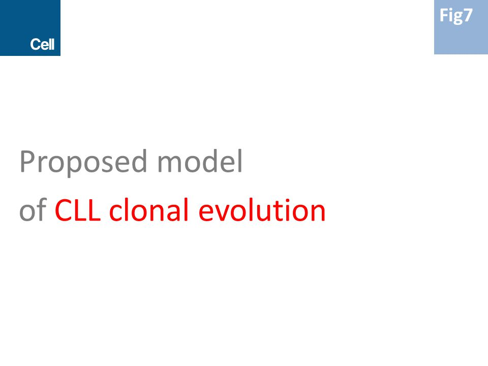Proposed model of CLL clonal evolution Fig7