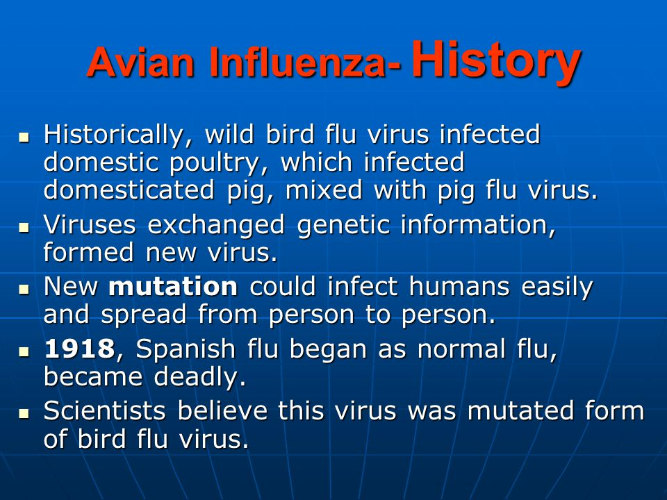 Avian Influenza- History Historically, wild bird flu virus infected domestic poultry, which infected domesticated pig, mixed with pig flu virus.