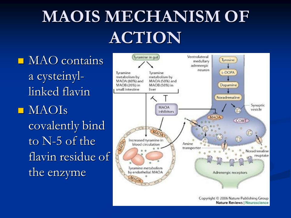 MAOIS MECHANISM OF ACTION MAO contains a cysteinyl- linked flavin MAO contains a cysteinyl- linked flavin MAOIs covalently bind to N-5 of the flavin r