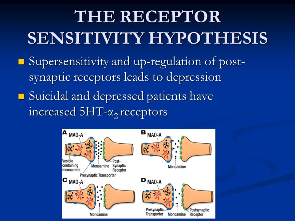 THE RECEPTOR SENSITIVITY HYPOTHESIS Supersensitivity and up-regulation of post- synaptic receptors leads to depression Supersensitivity and up-regulat