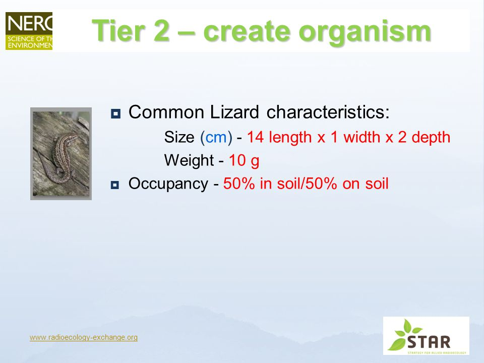 Tier 2 – create organism  Common Lizard characteristics: Size (cm) - 14 length x 1 width x 2 depth Weight - 10 g  Occupancy - 50% in soil/50% on soil www.radioecology-exchange.org