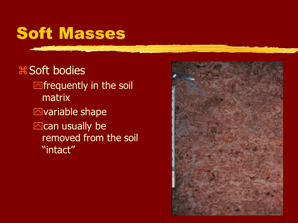 """Soft Masses zSoft bodies yfrequently in the soil matrix yvariable shape ycan usually be removed from the soil """"intact"""""""