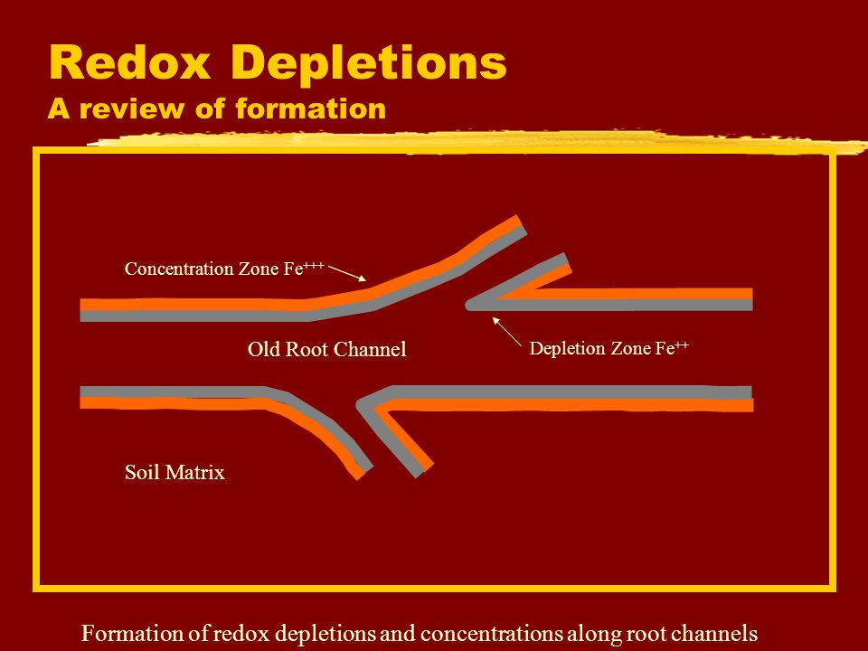 Redox Depletions A review of formation Old Root Channel Depletion Zone Fe ++ Concentration Zone Fe +++ Soil Matrix Formation of redox depletions and c