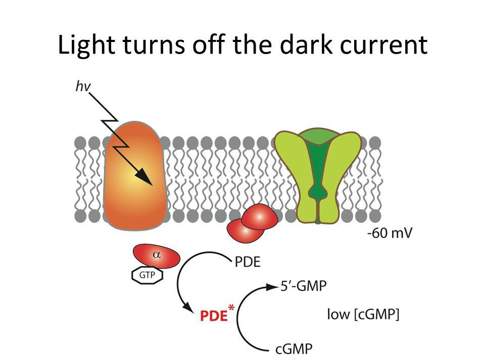 Light turns off the dark current