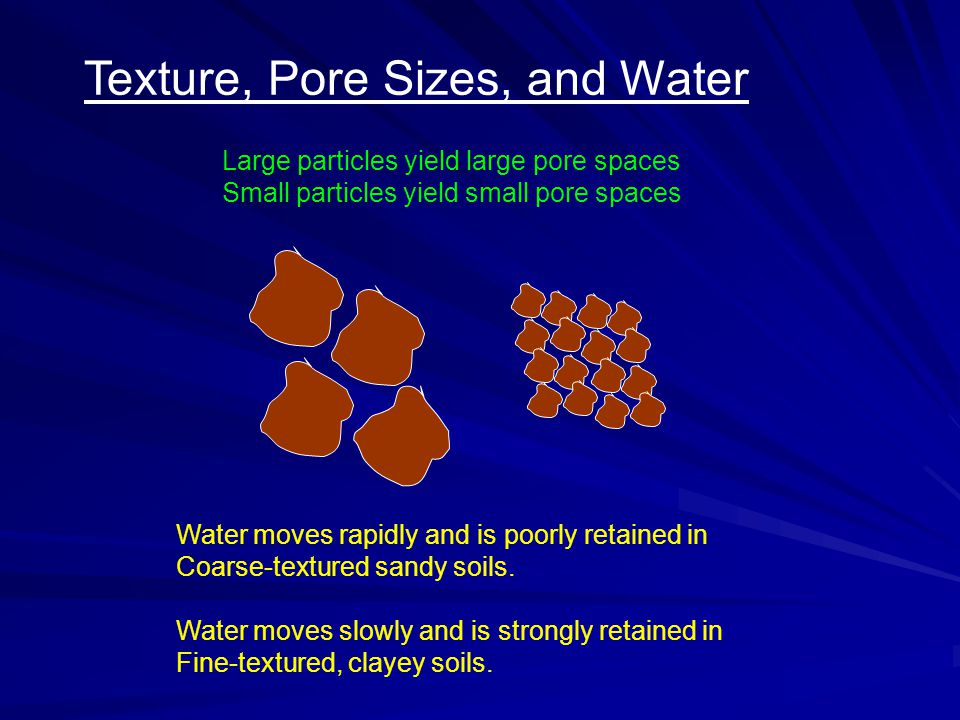 Texture, Pore Sizes, and Water Large particles yield large pore spaces Small particles yield small pore spaces Water moves rapidly and is poorly retained in Coarse-textured sandy soils.