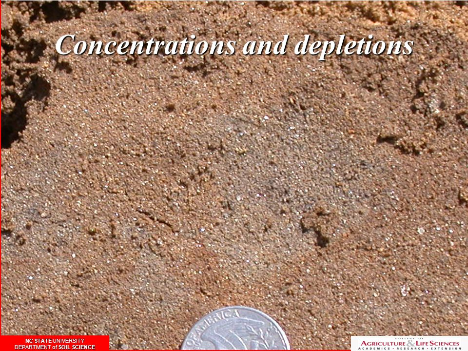 Concentrations and depletions NC STATE UNIVERSITY DEPARTMENT of SOIL SCIENCE NC STATE UNIVERSITY DEPARTMENT of SOIL SCIENCE