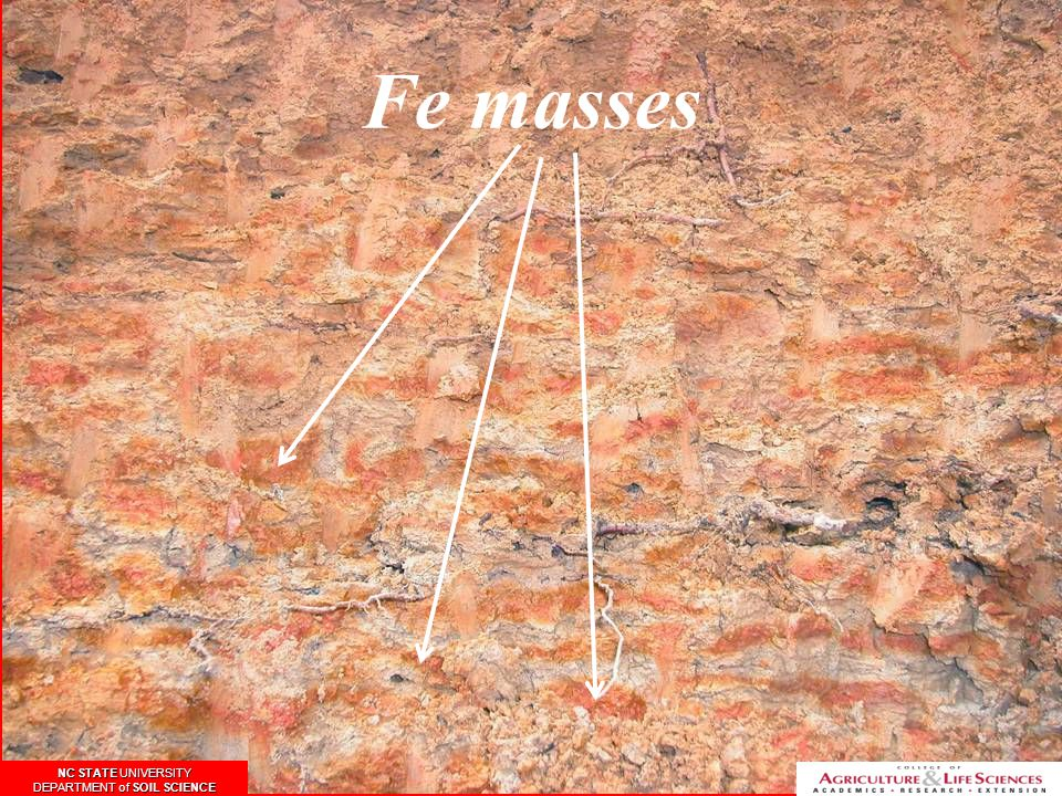 Fe masses NC STATE UNIVERSITY DEPARTMENT of SOIL SCIENCE NC STATE UNIVERSITY DEPARTMENT of SOIL SCIENCE NC STATE UNIVERSITY DEPARTMENT of SOIL SCIENCE