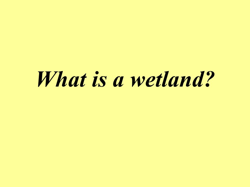 What is a wetland?