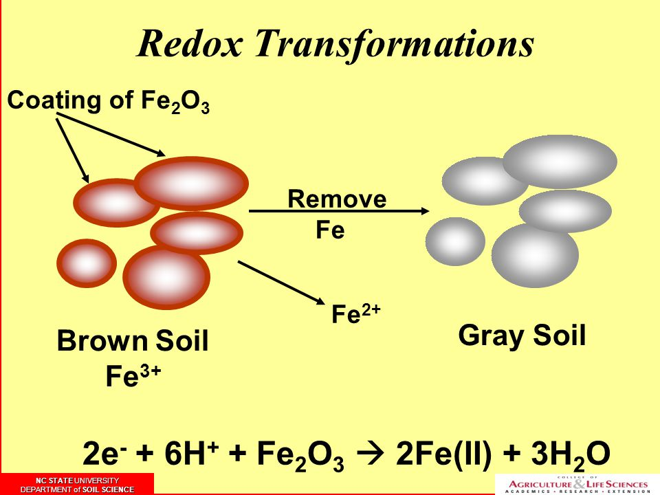 Redox Transformations Coating of Fe 2 O 3 Remove Fe Brown Soil Fe 3+ Fe 2+ Gray Soil 2e - + 6H + + Fe 2 O 3  2Fe(II) + 3H 2 O NC STATE UNIVERSITY DEP