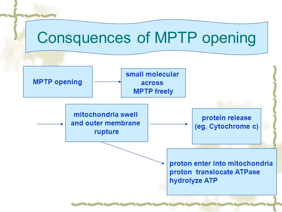 Consquences of MPTP opening mitochondria swell and outer membrane rupture protein release (eg.