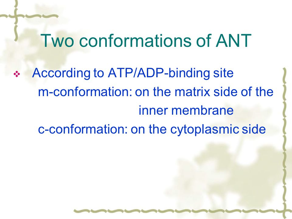 Two conformations of ANT  According to ATP/ADP-binding site m-conformation: on the matrix side of the inner membrane c-conformation: on the cytoplasmic side