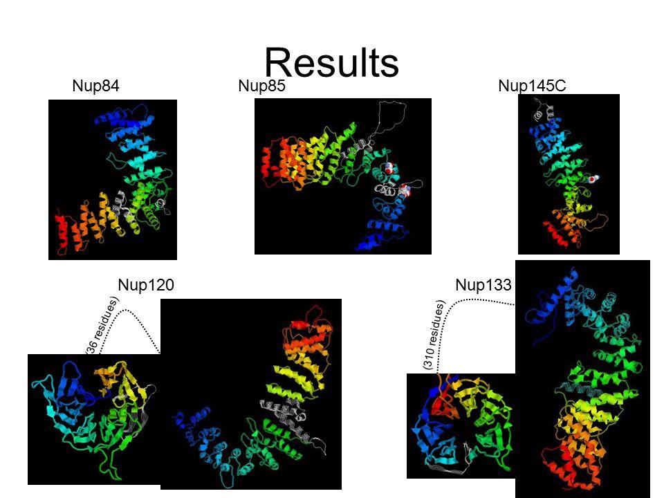 Results Nup84Nup85Nup145C Nup120Nup133 (310 residues) (36 residues)
