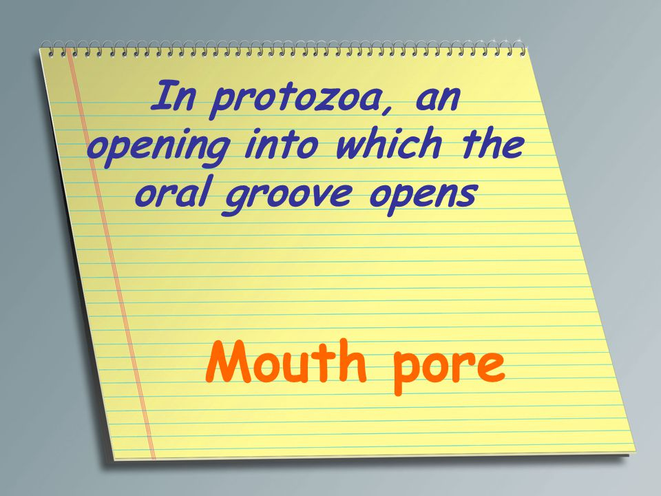 In protozoa, an opening into which the oral groove opens Mouth pore