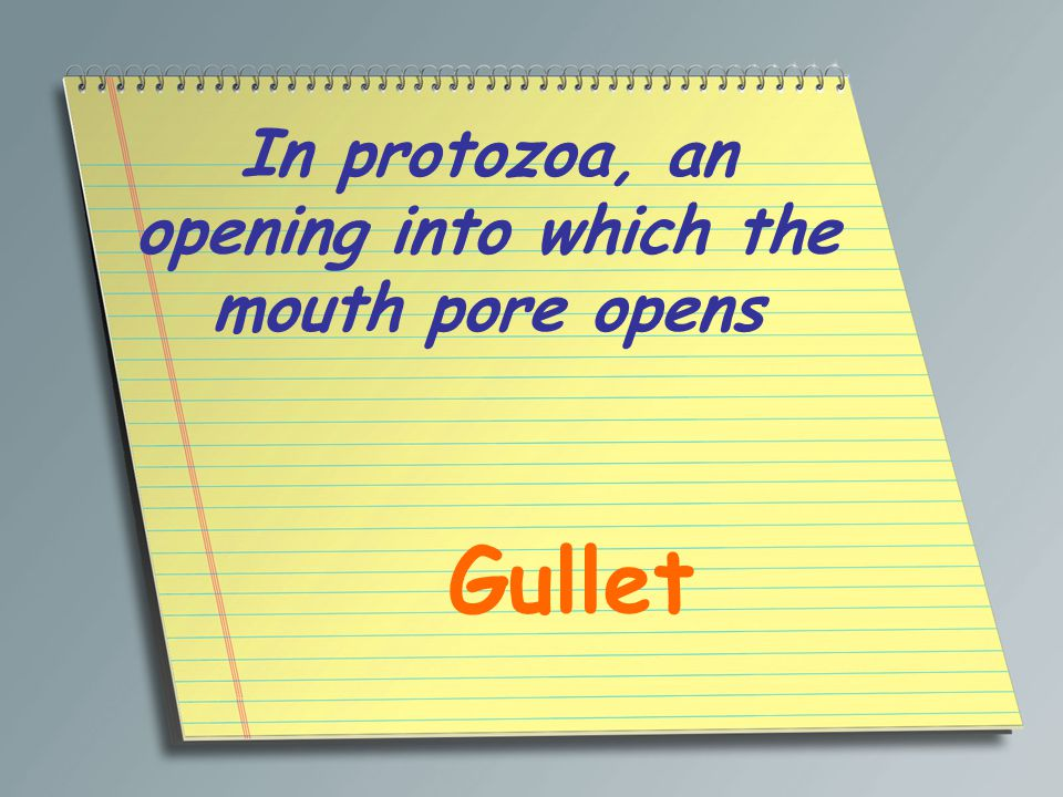 In protozoa, an opening into which the mouth pore opens Gullet