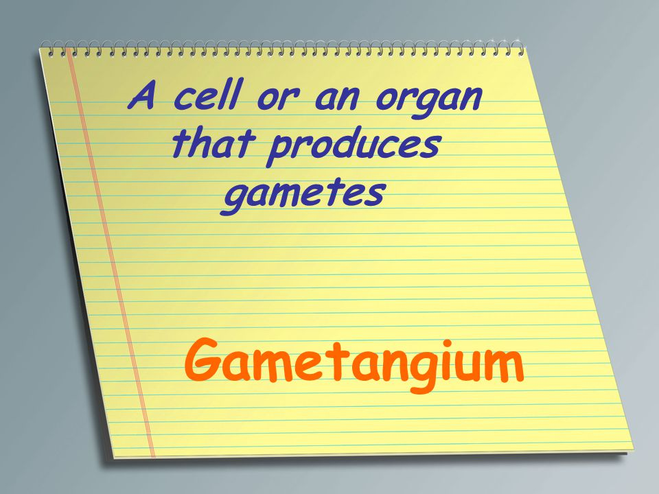 A cell or an organ that produces gametes Gametangium