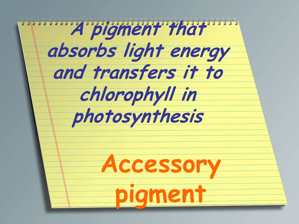 A pigment that absorbs light energy and transfers it to chlorophyll in photosynthesis Accessory pigment