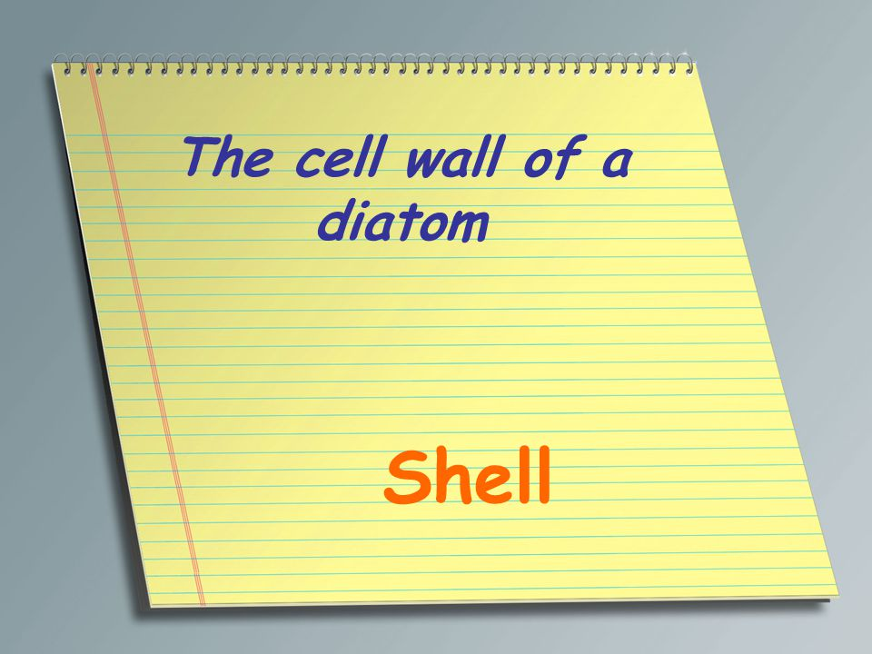The cell wall of a diatom Shell