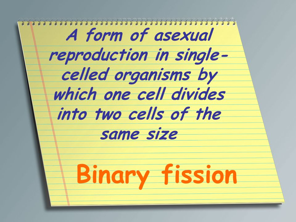 A form of asexual reproduction in single- celled organisms by which one cell divides into two cells of the same size Binary fission