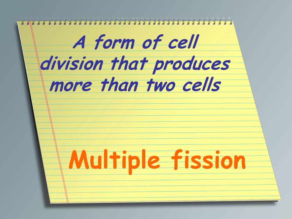 In protists, an organelle that accumulates water and then releases it periodically to maintain osmotic pressure Contractile vacuole