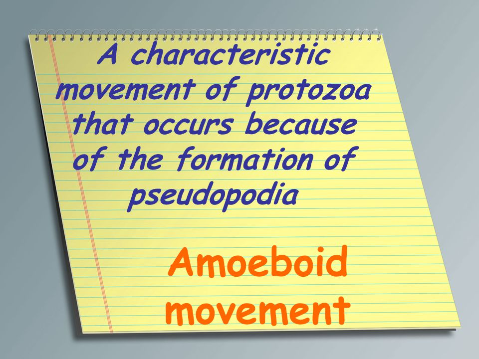 In some protists and invertebrates, a protective covering that the organism secretes or builds around itself Test