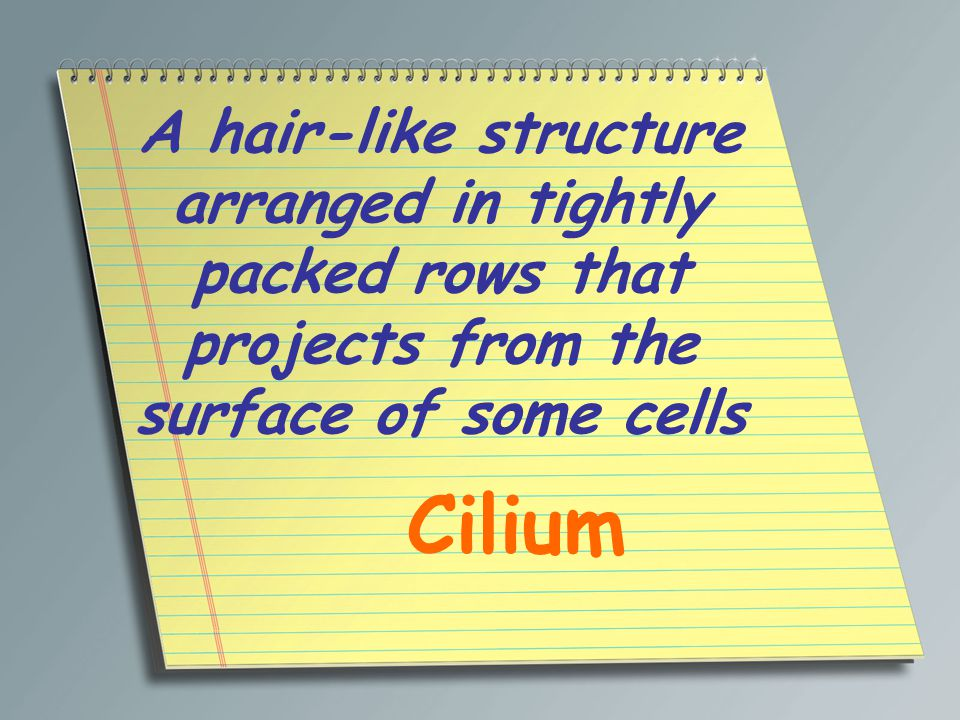 A hair-like structure arranged in tightly packed rows that projects from the surface of some cells Cilium