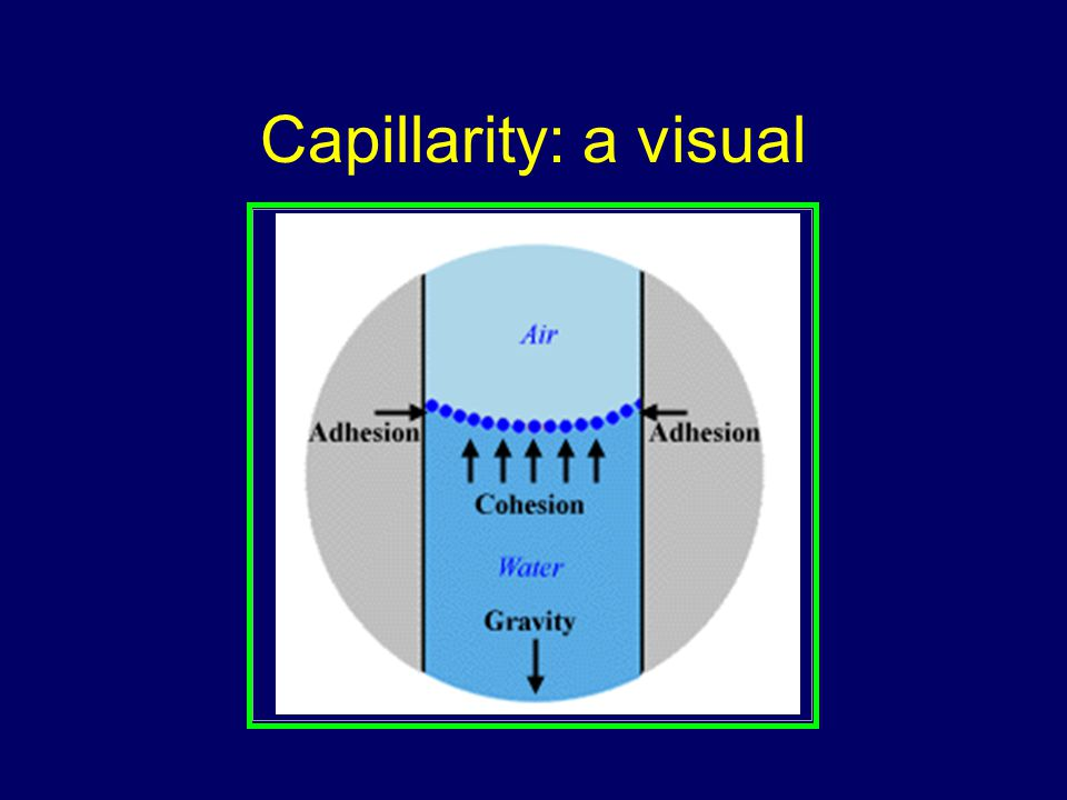 Capillarity: a visual